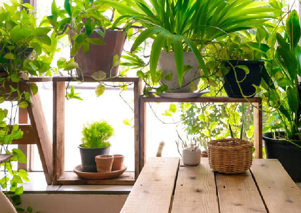 10 good luck plants for your home local singapore news - Good plants for home ...